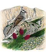 Kalen Malueg Drawings Posters - White-crowned sparrow at timberline Poster by Kalen Malueg