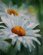 Daisies Paintings - White Daisies by Sharon Freeman
