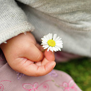 Clothing Posters - White Daisy In Baby Hand Poster by © Mameko