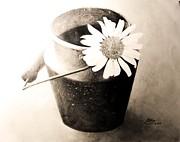 White Daisy Print by Muna Abdurrahman