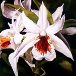 Orchid Art Paintings - White Dendrobium Orchid by Alfred Ng