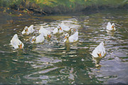 White Water Prints - White Ducks on Water Print by Franz Grassel