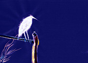 Christmas Greeting Originals - White Egret by Anil Nene