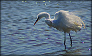 Pictures Photo Originals - White Egret Ruffled Feathers by John Wright