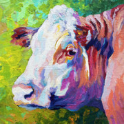 Cattle Ranch Prints - White Face Cow Print by Marion Rose