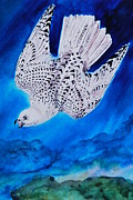 Mascot Painting Metal Prints - White Falcon Mascot Metal Print by Phyllis Barrett