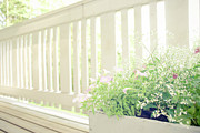 Balcony Prints - White Fence And Flowers Print by Photographer Mikael Nyberg