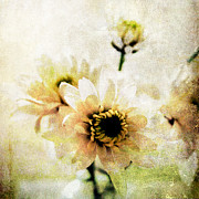 Gray Mixed Media Prints - White Flowers Print by Linda Woods