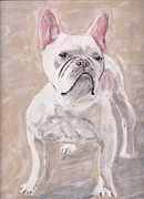 Arthur Rice Framed Prints - White Frenchie Framed Print by Arthur Rice