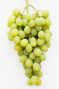 White Grapes Framed Prints - White Grapes Framed Print by Maj Seda