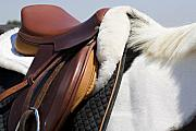 Leather Originals - White horse and saddle by Marilyn Hunt