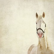 Bridle Framed Prints - White Horse Framed Print by Angie Johnson