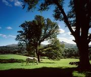 Tree Creature Prints - White Horse At Powerscourt, Co Wicklow Print by The Irish Image Collection