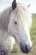 Y120831 Art - White Horse by copyright by Elena Litsova Photography