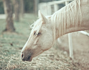White Horse Prints - White Horse Print by DOF-PHOTO by Fulvio