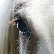Animal Hair Prints - White Horse Eye Print by Doug88888