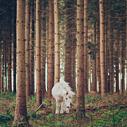 Grazing Horse Posters - White Horse In The Wood Poster by Julia Davila-Lampe