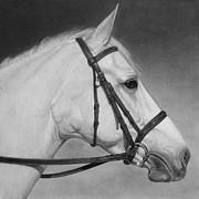Graphite Drawings Originals - White Horse by Tim Dangaran