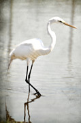 Egret Metal Prints - White Huntress Metal Print by Emily Stauring
