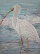 Shorebird Paintings - White Ibis at Dusk by Sandra Strohschein