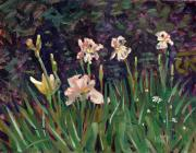 Plein Air Art - White Iris by Donald Maier