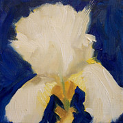 Square Prints - White Iris on Bright Blue Print by Margaret Aycock