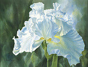 Green Florals Prints - White Iris Print by Sharon Freeman