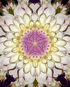 Dahlias - White Kaleidoscope  by Cathie Tyler