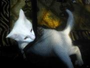 Youthful Digital Art Metal Prints - White kitten Metal Print by David Lee Thompson