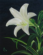 White Pastels Metal Prints - White Lily Metal Print by Brenda Maas