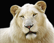 Lions Digital Art Posters - White Lion Poster by Julie L Hoddinott