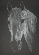 White Mare Print by Stephanie L Carr
