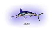 Game Fish Drawings Framed Prints - White Marlin Framed Print by Ralph Martens