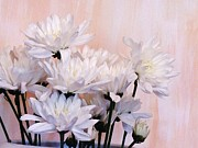 Peach And White Prints - White Mums Print by Marsha Heiken