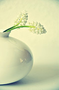 White Grape Prints - White Muscari (grape Hyacinth) Flowers Print by Photo by Ira Heuvelman-Dobrolyubova