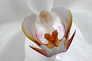 Orchid Photo Prints - White on White Print by Juergen Roth