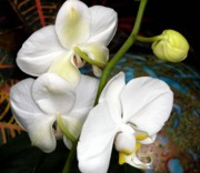 Orchids Digital Art - White on White by Mindy Newman