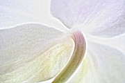 Flower Macro Prints - White Orchid Print by Kristin Kreet