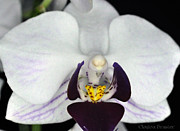 Clayton Bruster - White Orchid Macro