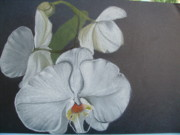 Dion Halliday - White Orchid On Black