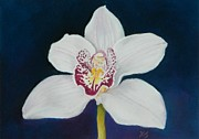 Xenia Sease - White Orchid
