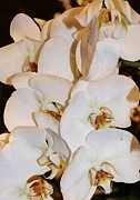 White Orchids Print by Bruce Bley