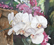 Lisa Prusinski - White Orchids