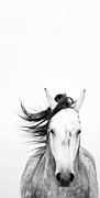 Horse Photos - White Out by Patty Hallman