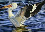 Pelican Pastels Framed Prints - White Pelly Stretch Framed Print by Deb LaFogg-Docherty