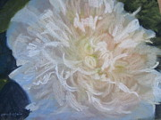 Flowers Pastels - White Peony by Sandra Strohschein