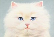 Cat Portraits Posters - White Persian Poster by Andrew Farley