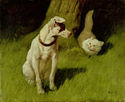Dog Vs Cat Posters - White Persian Cat and Jack Russell Poster by Arthur Heyer