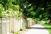 Streetlight Posters - White Picket Fence And Roses Poster by HD Connelly