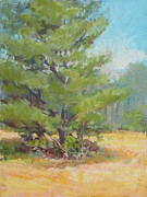 Georgia Pastels - White Pine Field by Marsha Savage